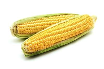 Disadvantages of Genetically Modified Food