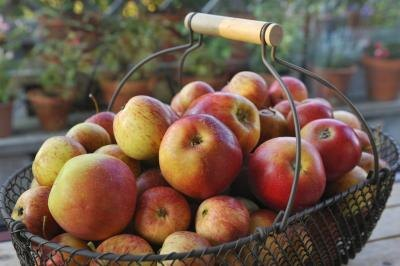 What Vitamins Do Apples Contain?