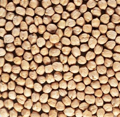 What Are the Health Benefits of Garbanzo Beans?