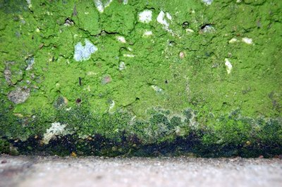 The Side Effects of House Mold