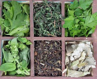 The Best Herbal Remedies for Lung Cancer