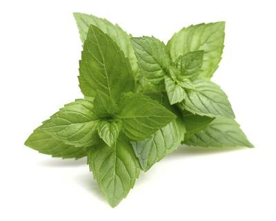 What Are the Benefits of Peppermint Soap?