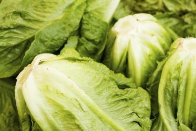 Nutritional Value of Romaine vs. Iceberg Lettuce