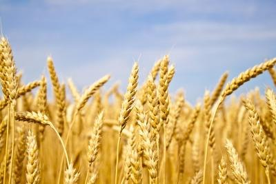 Wheat Intolerance & Skin Problems