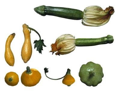 What Goes With Squash for Dinner?