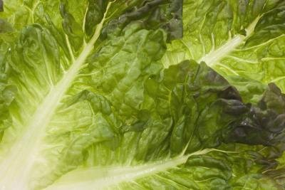 Can You Eat Too Much Lettuce?