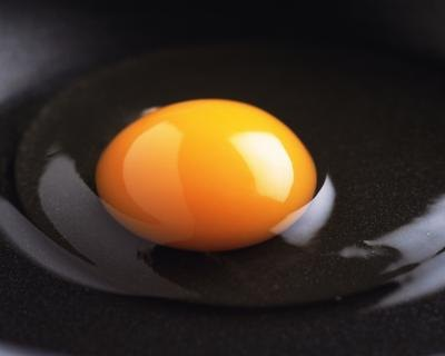 Which Part of an Egg Has the Biggest Amount of Protein?
