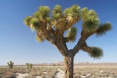 Is Yucca a Good Diet Food?