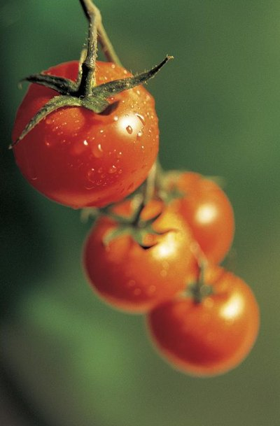 Folate in Tomatoes