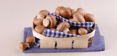 Health Benefits of Baby Bella Mushrooms