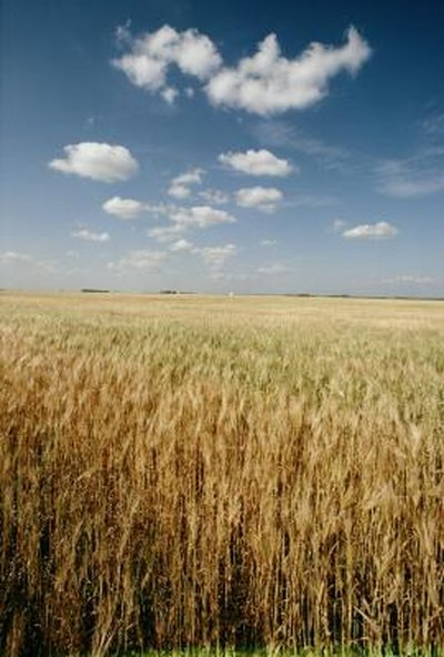 Compare Soluble Fiber in Lentils & Barley