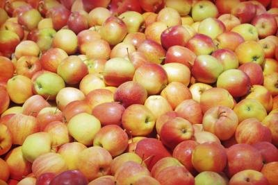 The Vitamin C in Apples | LIVESTRONG.COM
