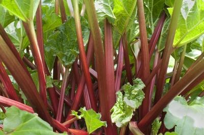 When Can Babies Have Rhubarb?
