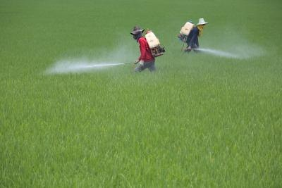 The Effects of Pesticides in Food