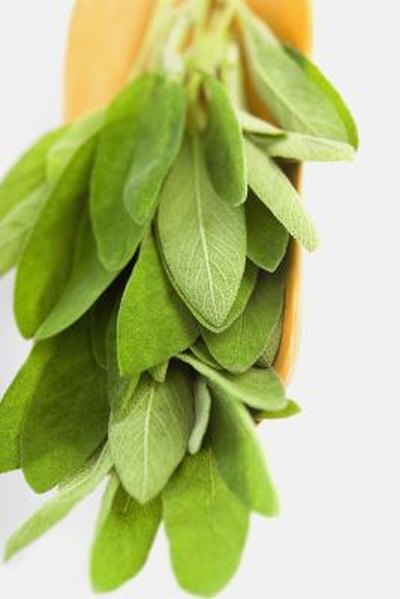 How to Heal With White Sage