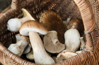 What Vitamins Do Mushrooms Have?