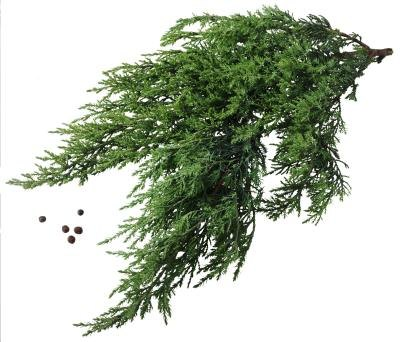 Are the Berries on My Juniper Bush Edible?