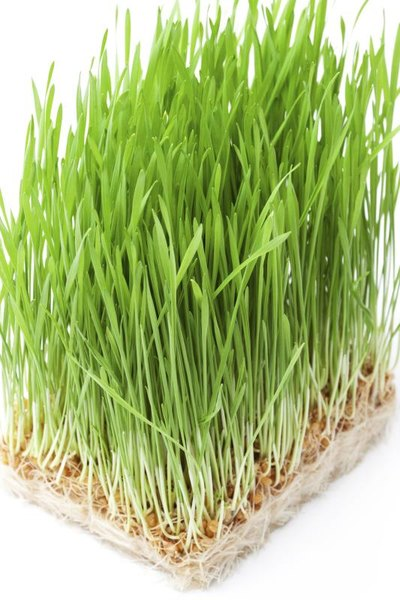 Wheatgrass & Weight Loss