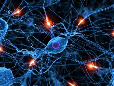 How Dopamine Neurotransmitters Affect Behavior