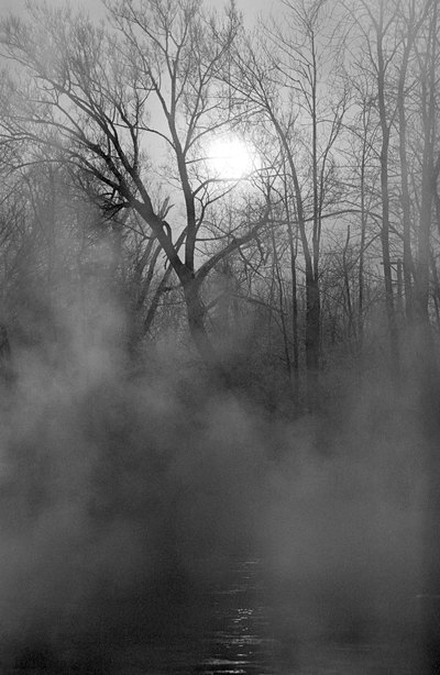 Good Ideas for a Haunted Forest for Teens