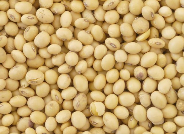 Are Soybeans Protein or Carbohydrate?