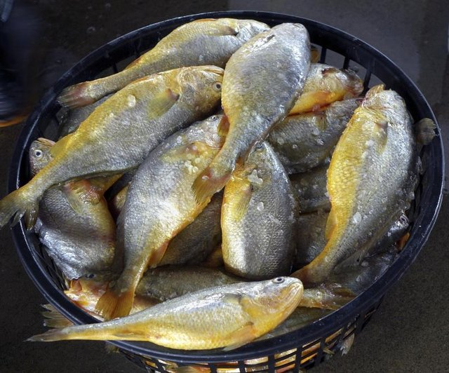 How to Cook Croaker Fish