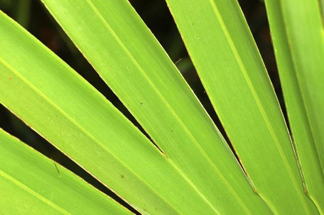 Is Saw Palmetto Good for PCOS?