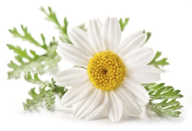 Remedies for a Cough With Chamomile Tea