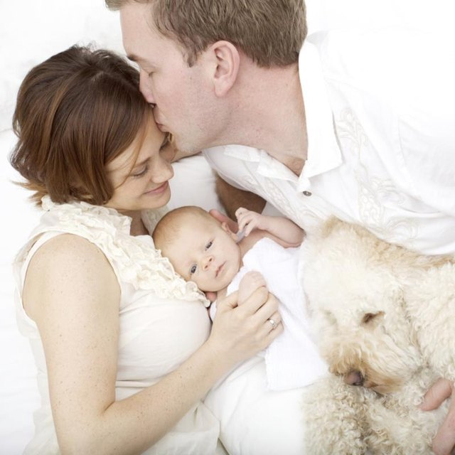 Signs an Infant Has a Dog Allergy