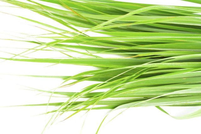 What Are the Health Benefits From Drinking Fever Grass Tea?