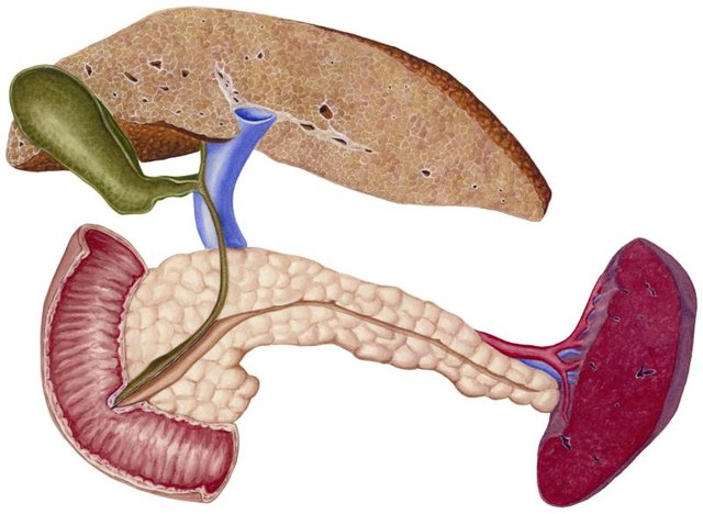 Early Stages of Liver Disease