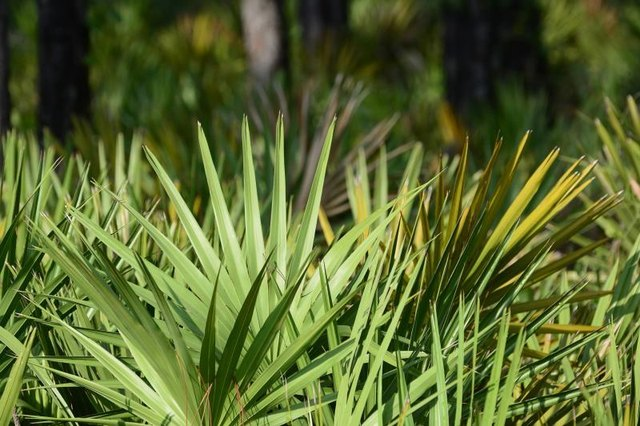 Can You Use Both Minoxidil & Saw Palmetto for Hair Loss?