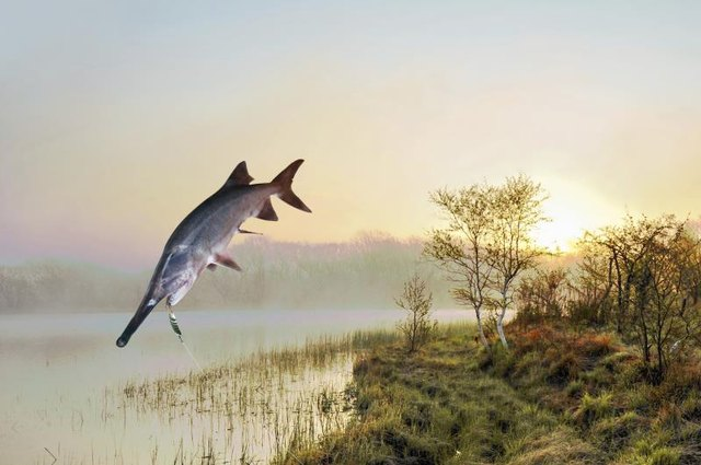 Can You Eat Paddlefish?