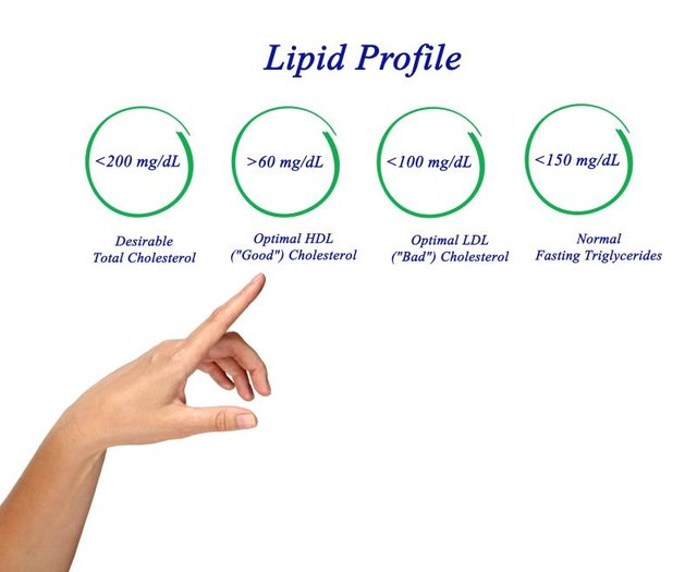 How Does the Body Use Lipids?