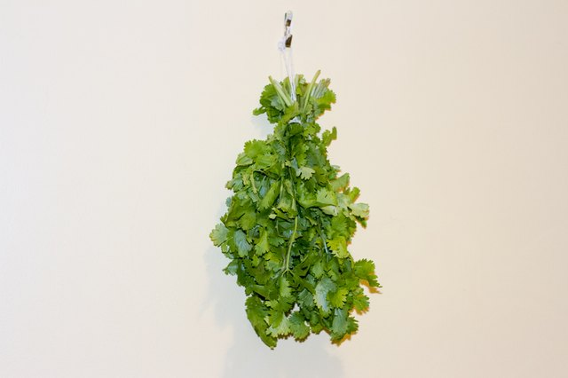 How to Dry Cilantro at Home