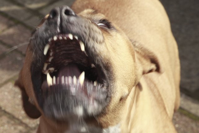Pit bulls and Rottweilers were responsible for 76 percent of fatal attacks between 2005 and 2015, according to Dogsbite.org.