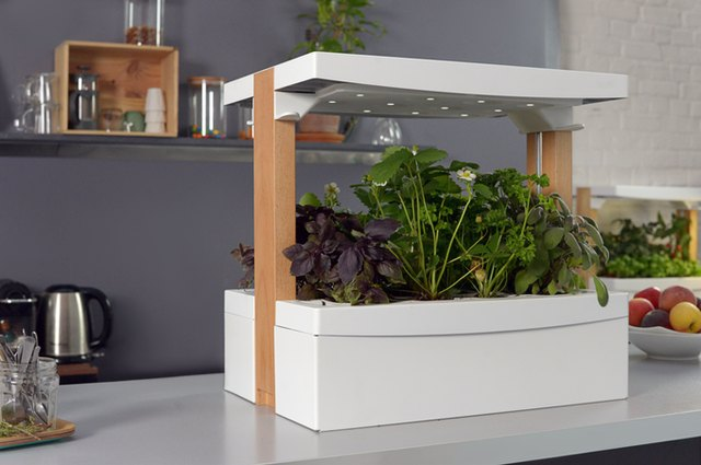 Fresh Square self watering, self sunning, indoor plant box