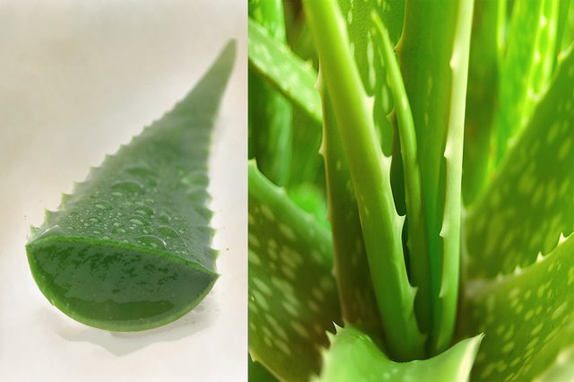 How to Use Aloe as a Pore Minimizer Mask