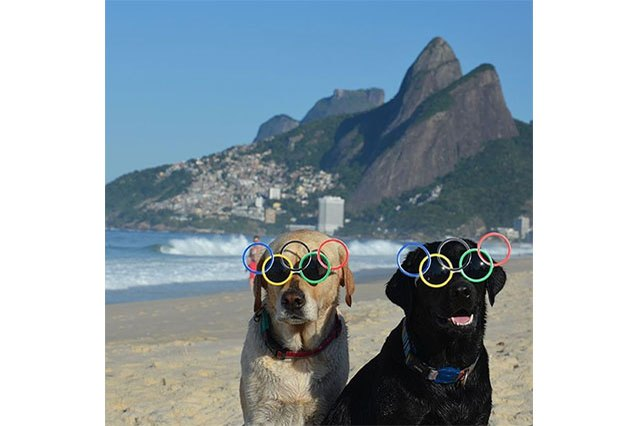 Forget the dog days of summer — it's the Olympics!