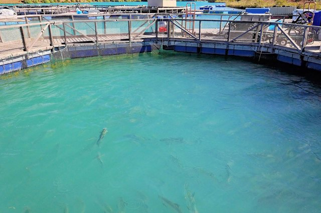 Farmed fish can contain contaminants as well.