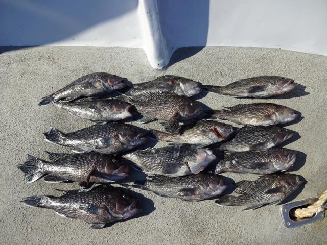 The Best Bait for Sea Bass