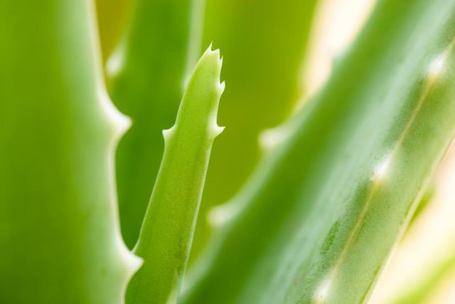 5 Things You Need to Know About Treating Eczema With Aloe Vera