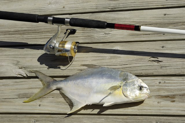 Pompano fish and fishing pole