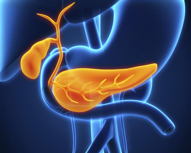 What Causes the Release of Pancreatic Juice & Bile?
