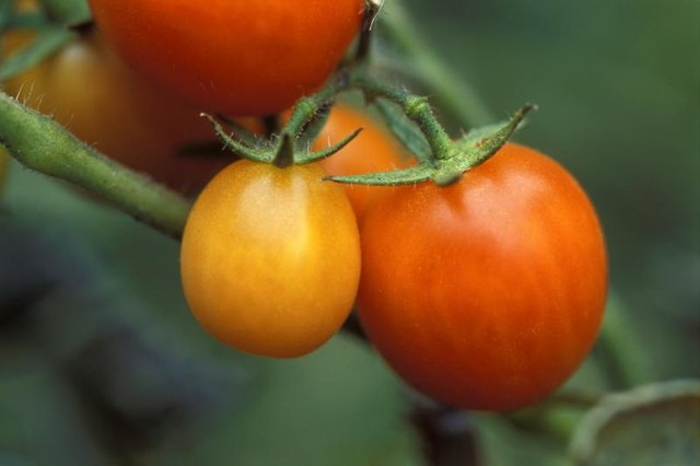 Can Tomatoes Raise Blood Sugar in Diabetics?
