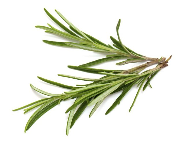Rosemary oil helps with memory and focus.