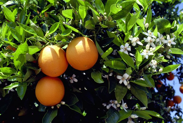 Citrus flower are often used in organic skincare products