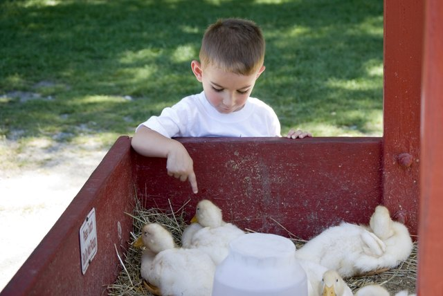 A boy touches a duck at a petting zoo.
