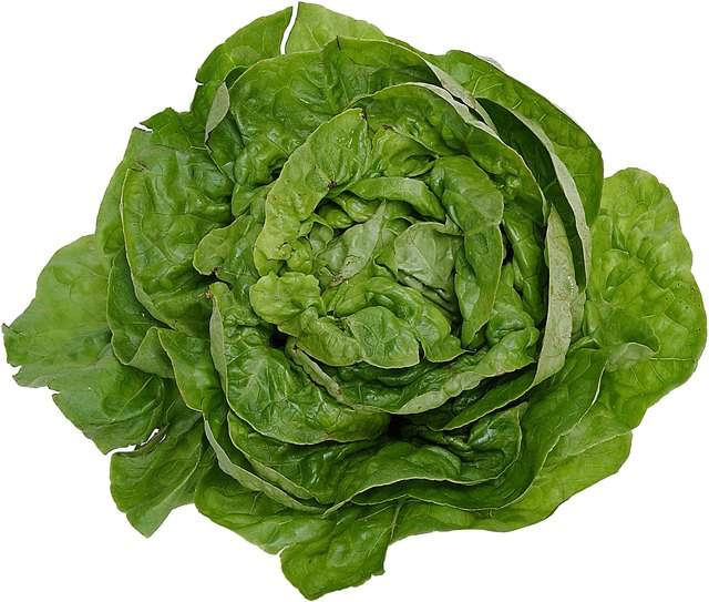 Lettuce is a good source of vitamin K.