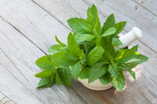 Peppermint oil is uplifting and relieves headaches.